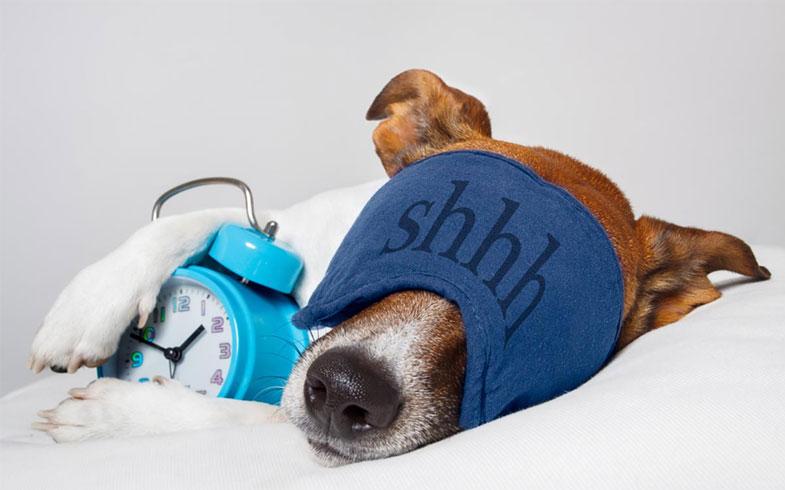 5 boas razões para acordar cedo